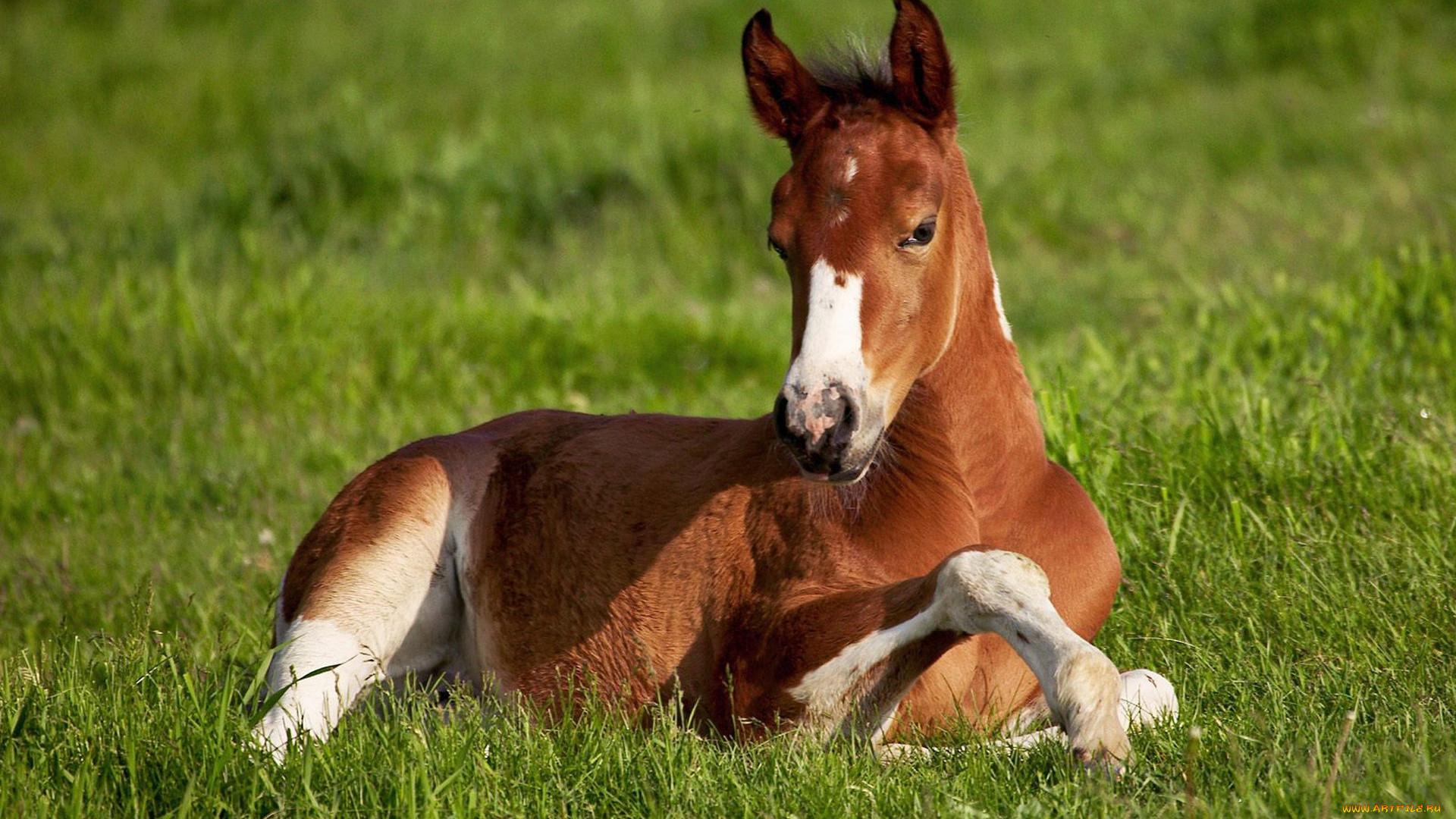 куры картинки животного лошадку агентства харькове выполняют